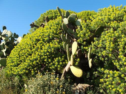 la flora dell'etna